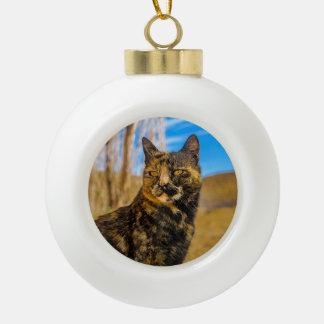 Boule En Céramique Séance et observation sauvages adultes de chat