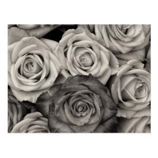 Bouquet assez noir et blanc de roses des fleurs carte postale