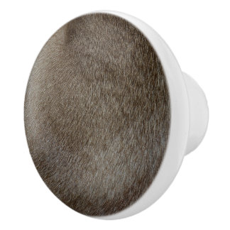 Bouton De Porte En Céramique Le regard de la fourrure luxueuse de chat siamois