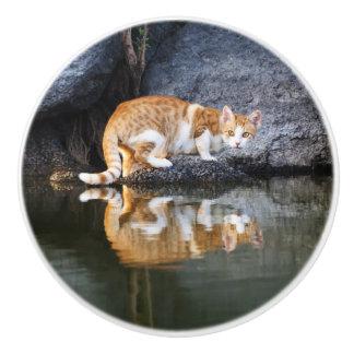 Bouton De Porte En Céramique Photo drôle de l'eau d'étang de réflexion de chat
