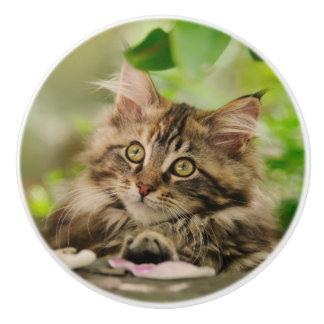 Bouton De Porte En Céramique Portrait mignon de chaton de chat de ragondin du