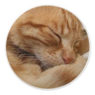 Boutons oranges de raboteuse de chat de gingembre
