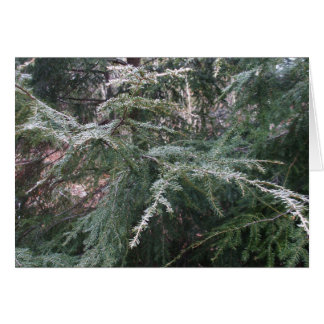 Branches givrées dans la carte Matin-Vide