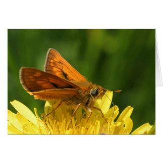 bruine vlinder kaart