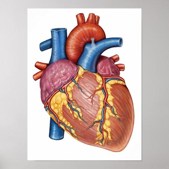 Ongekend Bruto Anatomie van het Menselijke Hart Poster | Zazzle.be RB-87