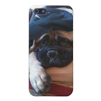 Bullmastiff/cas Iphone 5 de chien Étui iPhone 5