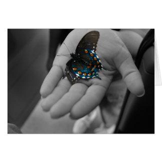 Buttefly à disposition carte
