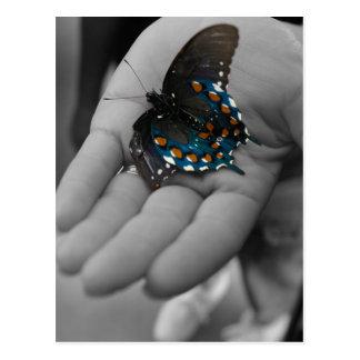 Buttefly à disposition cartes postales