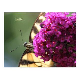 Buttefly suçant sur le buddleia carte postale