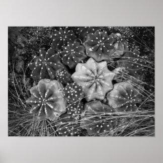 Cactus noir et blanc de photographie poster