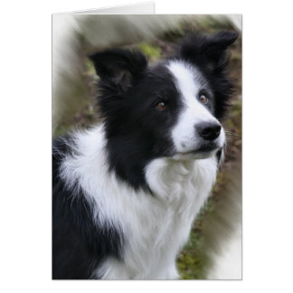 Cadeaux d'art de border collie carte