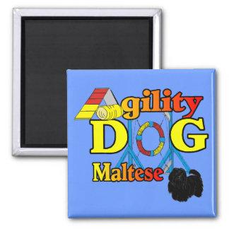 Cadeaux de Maltese_Agility Aimant