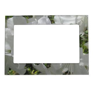 Cadre Aimanté Avec Photo Cadre - magnétique - azalées blanches