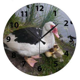 Canard de Muscovy et horloge murale de canetons