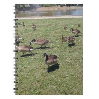 Canards dans le carnet de notes à spirale de