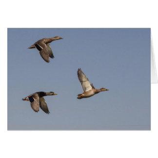 Canards en vol carte de vœux