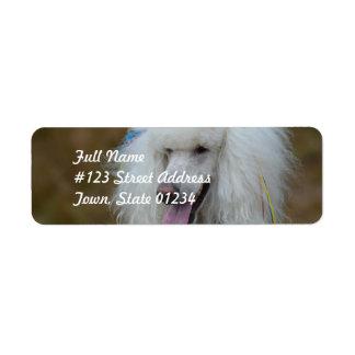 Caniche blanc savoureux étiquette d'adresse retour