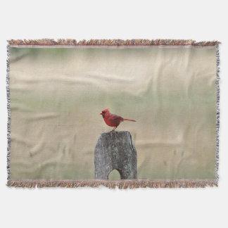 Cardinal du nord couverture