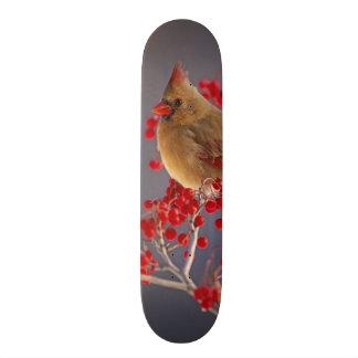 Cardinal du nord féminin parmi l'aubépine skateboard old school 18,1 cm