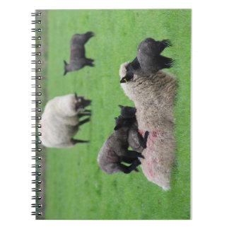 Carnet Agneau et moutons de ressort