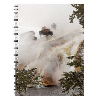 Carnet Bison chaud et humide au parc national de