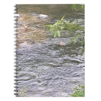 Carnet Canards de rivière