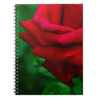 Carnet classique de rose rouge