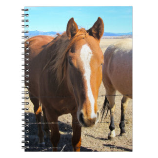 Carnet de cheval