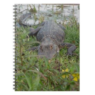 Carnet de photo d'alligator