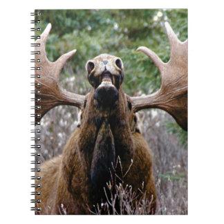 Carnet d'orignaux étranges de taureau