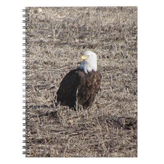 Carnet Eagle chauve