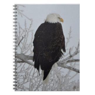 Carnet Eagle chauve américain