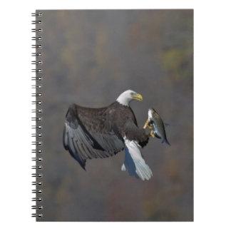 Carnet Eagle chauve regardant fixement un poisson