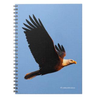 Carnet Eagle chauve stupéfiant dans le vol de coucher du