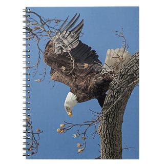 Carnet Eagle chauve sur une branche d'arbre