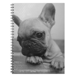Carnet Frenchie puppy