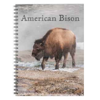 Carnet Jeune bison ou Buffalo beau
