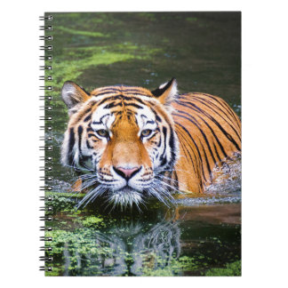 Carnet Natation de tigre