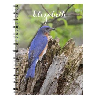 Carnet Oiseau bleu oriental