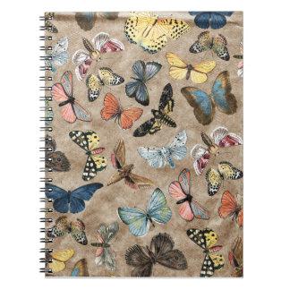 Carnet Papillon de Brown
