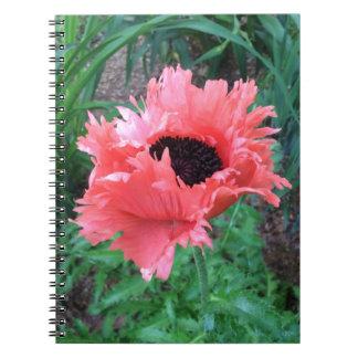 "Carnet PAVOT ""ruches roses"" ---"