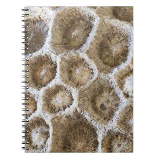 Carnet Photo de corail fossilisée de plan rapproché