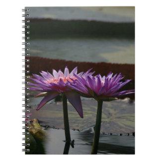 Carnet pourpre de Lotus de nénuphars