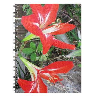 Carnet rouge de photo de spirale de lis