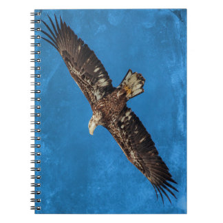 Carnet Subadult Eagle chauve en vol