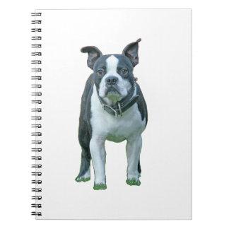 Carnet Terrier 1B de Boston
