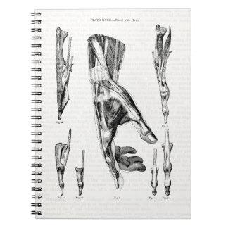 Carnet Vieux muscles médicaux d'art de la main et du