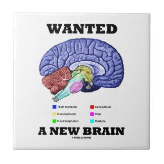 Carreau A voulu un nouveau cerveau (l'attitude anatomique