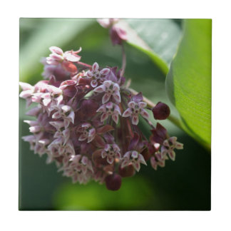 Carreau Absinthe du sud (abrotanum d'armoise)
