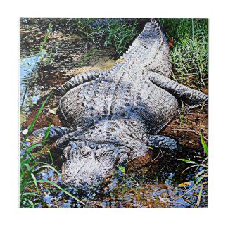 Carreau Alligator (la Floride, Louisiane et Mississippi)